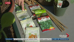 How to grow an edible garden