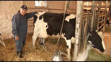 Dairy Farmers of Ontario slams USMCA trade deal