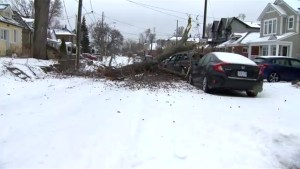Large tree rips down power line, smashes vehicles on street in East York