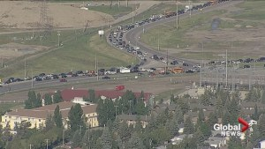 How a dead deer on the side of the road caused traffic gridlock in Calgary
