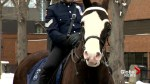 Sarge the police horse retires