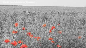 Listen to the late Leonard Cohen recite Flanders Field for Remembrance Day