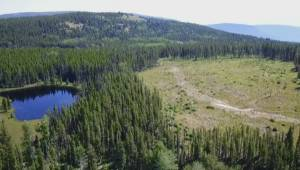 District of Peachland asking province for moratorium on logging in watersheds