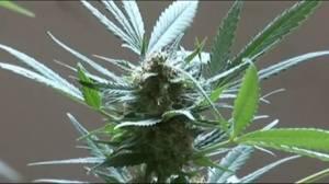 Are employers ready for Canada's new marijuana laws?