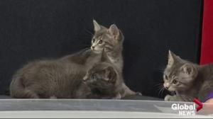 Edmonton Humane Society: Izzy, Betty, Veronica and Archie