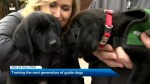 Training the next generation of guide dogs