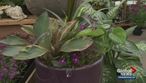Gardenworks: Indoors to outdoors