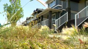 Unsightly lawns once again raising concerns in Regina neighbourhoods