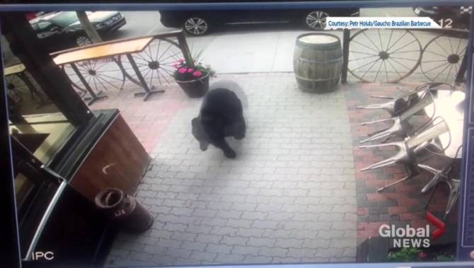 Canmore diners shocked by bear walking into restaurant