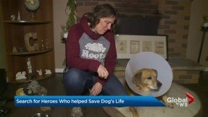 EXCLUSIVE: Oshawa woman looking for heroes who saved her dog's life