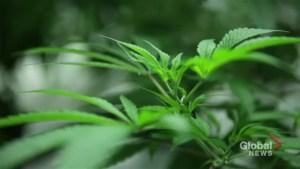 Canada makes history by legalizing recreational marijuana