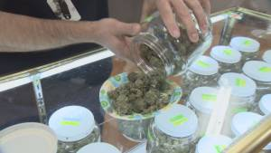 Province and city blame each other for lack of Vancouver marijuana dispensaries