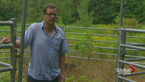Saint-Lazare farmer searches for runaway cattle