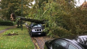 Second powerful storm moves across southern B.C. Friday afternoon