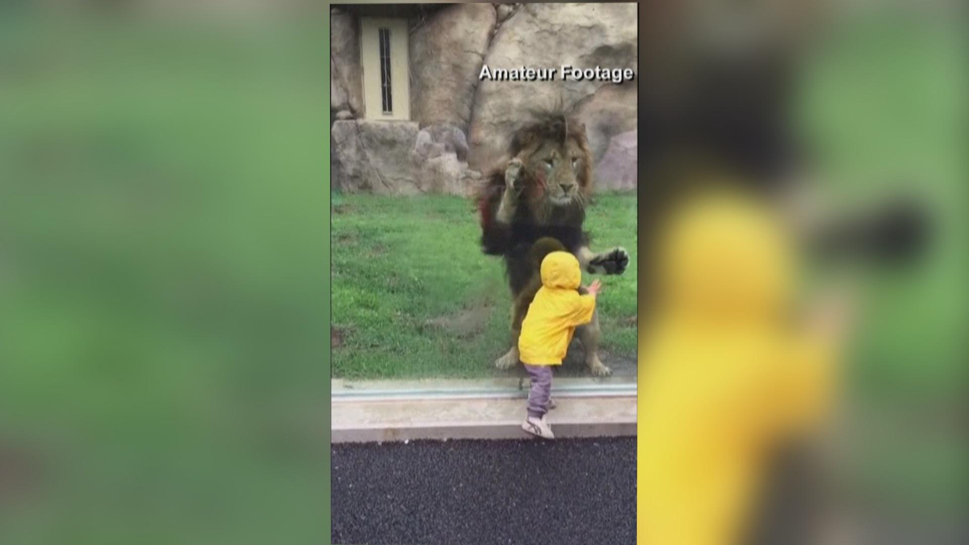 Amateur Video Zoo