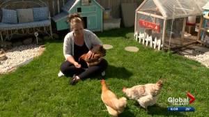 Charge withdrawn against Calgary woman fighting to keep emotional support hens