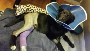Go Fund Me page set up for rescued puppy