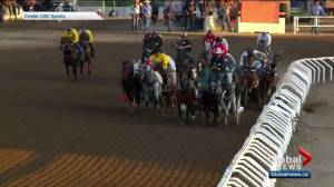 Horses crash into fence at Calgary Stampede chuckwagon race
