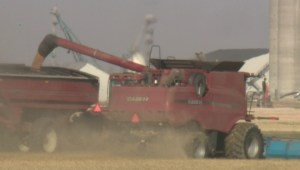 Southern Alberta farmers racing to finish harvest with warm weather