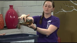 Ontario Turtle Conservation Centre highlights wood turtles and their endangered status