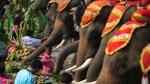 Elephant Day celebration in Thailand