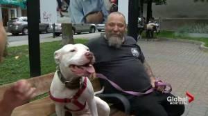 Homeless Montrealer fined for dog