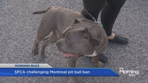 Pit bull ban contested in court