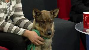 SCARS looks for a new home for Zeus