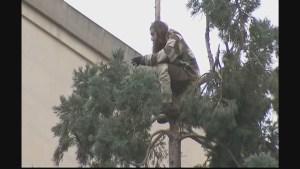 Tree man finally descends from 80-foot tree in Seattle