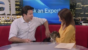 Ask an expert: Bonding with cats