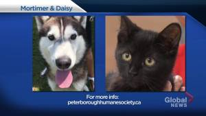 Global Peterborough's Shelter Pet Project – Mortimer and Daisy
