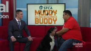 Muddy Buddy raising funds for Saskatchewan SPCA