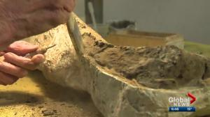 A closer look at the University of Alberta's dino lab