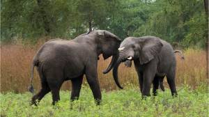 Botswana lifts ban on hunting elephants