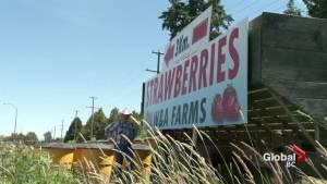 Richmond farmer battles city hall over sign