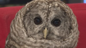 Meet the rescued raptors at Delta's OWL Rehab
