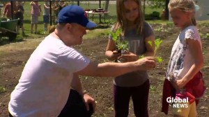 Intergenerational garden flourishes in Otterburn Park