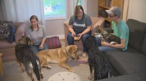 Animal rescue hoping Winnipeggers can lend a helping paw with food donations