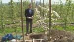 Vandals target East Kelowna orchard