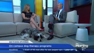 How dogs are helping university students de-stress