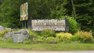 Uncertainty surrounding Cherry Brook Zoo