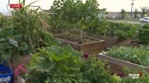 Winnipeg Harvest: Gardening provides more than just fresh produce