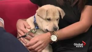 Adopt a Pet: Puppies Ash & Thorn and special SPCA announcement