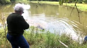 Great-grandmother kills massive gator in Texas she believes ate her miniature horse