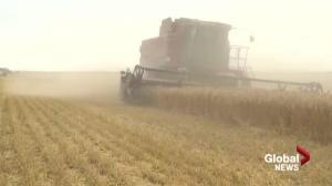Saskatchewan farmer left in tough financial position due to decades old program