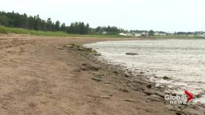 Rural community concerned as New Brunswick looks to privatize Murray Beach Provincial Park
