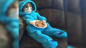U.S. Embassy sorry after cat in a Cookie Monster outfit emailed