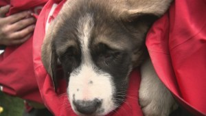 Puppies stranded for days finally rescued