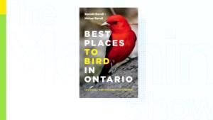 A beginner's guide to bird watching