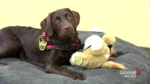 Newest member of the Kennebecasis Regional Police Force there to lend a helping paw